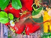 KOJE VOĆE ILI POVRĆE SADRŽI NAJVIŠE PESTICIDA? To su jagode, a vi ih jedete ko ludi (VIDEO
