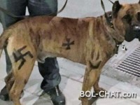 Sweden: Drawn a hooked cross on a dog and received a fine of 1,300 euros