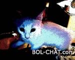 moja slatka maca