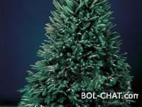 Beograđani: Previše novca za plastično drvo od 18 metara