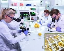 UNIVERSITY STANFORD: Gefrorene Zitrone ist viel stärker als Chemotherapie