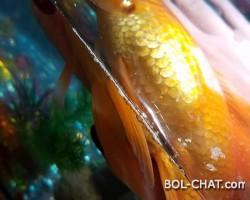 Tuzno je vidjeti svako zivo bice kad umire pa makar to bila i riba .
